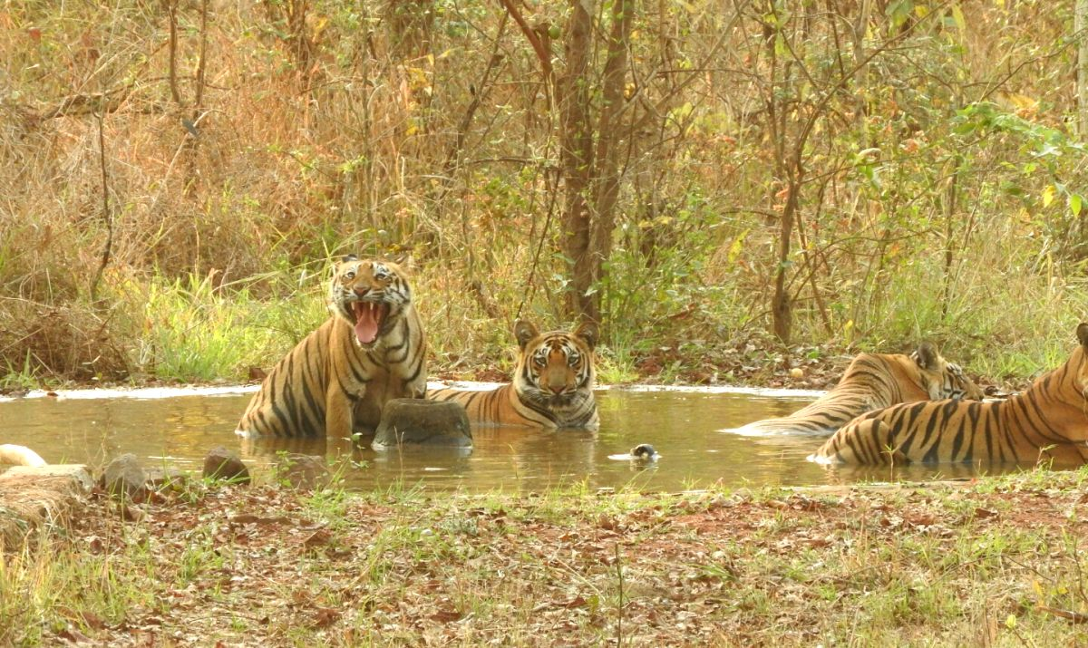 Pilibhit (Uttar Pradesh), June 3 (IANS) The Pilibhit Tiger Reserve (PTR) authorities have sought approval to appoint its own veterinary officer, biologist and sociologist instead of outsourcing these services, an official said on Wednesday.