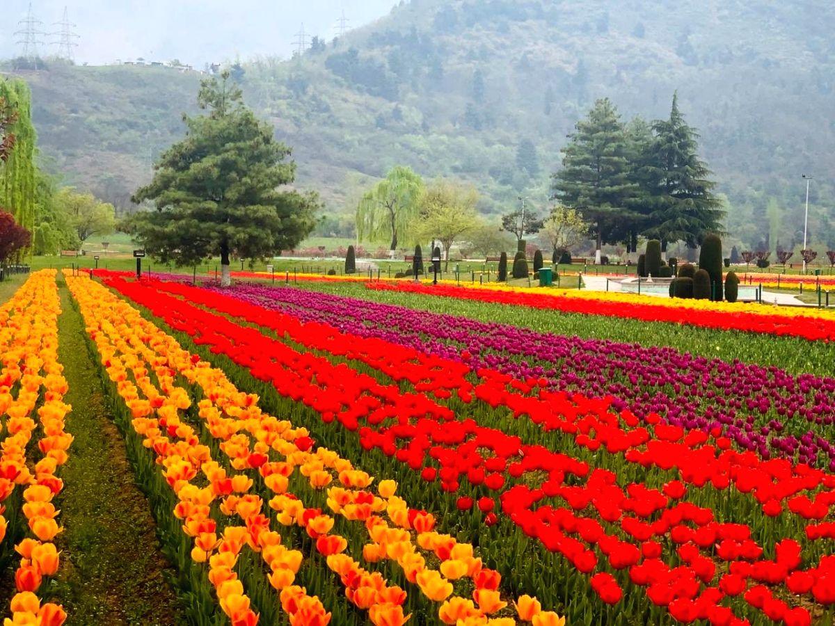 PM asks people to visit Srinagar's Tulip Garden, savour J&K's hospitality.(photo:Modi Twitter)