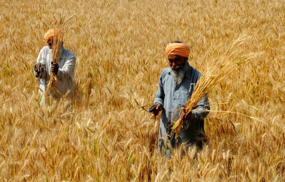 Punjab procures 125L MT wheat. (File Photo: IANS)