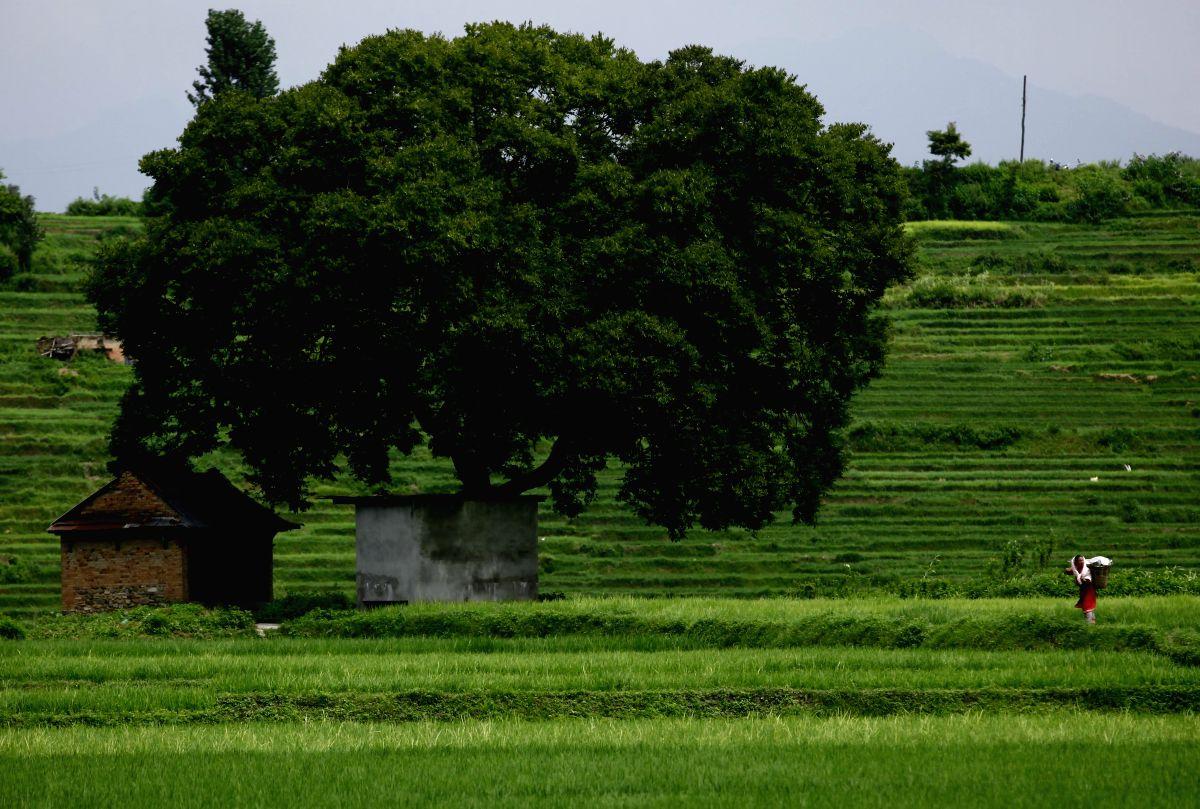 Registration of non-agri land on Telangana's online portal from Nov 23