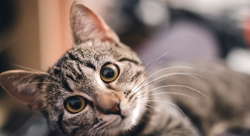 Research on human-cat link on Ancient Silk Road. (Photo Courtesy: Unsplash)