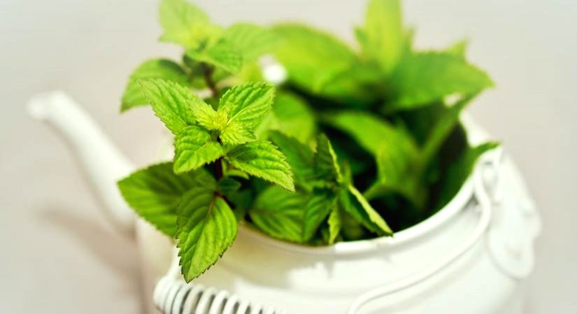 The abundant health benefits of mint leaves.(photo:IANSLIFE)