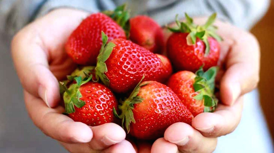The large green fields of Udi Nachshon's farm are dotted with thousands of red strawberries.