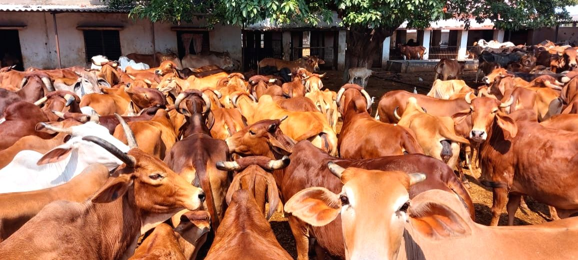 UP to geotag nearly 5.2 crore cattle by March.
