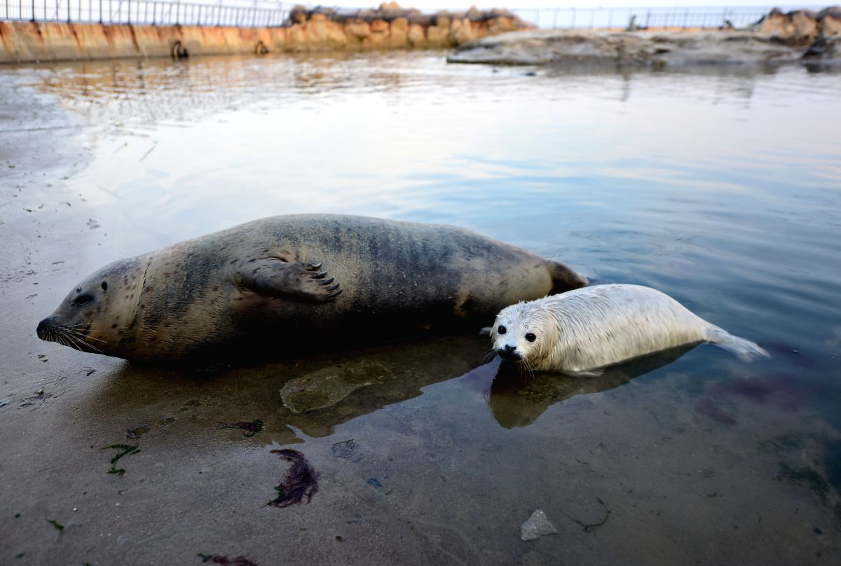 Seal Cub with her mother.