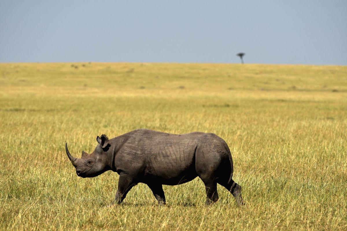 Zimbabwe reintroduces black rhinos to 2nd largest national park