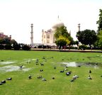 Agra: Birds beat the heat at Taj Mahal Gardens
