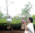 Alipurduar: Mamata Banerjee duing her visit to the tea gardens