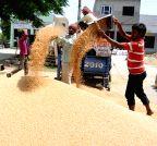 Amritsar: Grain market