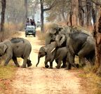 Assam: Kaziranga National Park