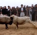 Balkh (Afghanistan): Afghans watch traditional ram-fighting in Balkh