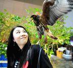 Bangkok (Thailand): Exhibition of Pet Variety And The City 2014