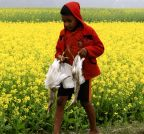 Bangladesh: A man carries his catch back home after hunting