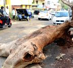 Bengaluru: Heavy rains cause damage