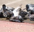 Hyderabad: Birds beat the heat