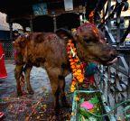 Kathmandu: Tihar festival