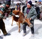 Jammu and Kashmir: Siachen Brigade runs a veterinary camp