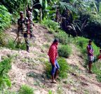 Sonamura:  Ganja plants destroyed under BSF supervision