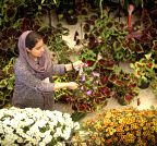 Tehran: Autumn Flowers Exhibition