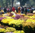 Varanasi: Flower exhibition
