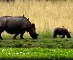 2,479 rhino horns, ivory, animal parts to go up in flames in Assam soon