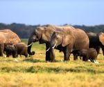 4 poachers arrested in S.Africa's Kruger National Park