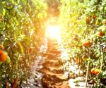6 ways buying organic can help save the planet