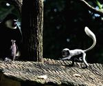 SINGAPORE WRS ANIMAL BABY