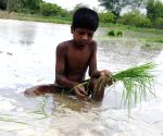 Child works in fields