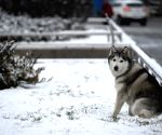 CHINA NINGXIA SNOWFALL