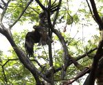 Firemen rescue an injured eagle