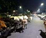 12 cows killed in UP road accident
