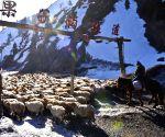 CHINA XINJIANG HERDSMEN SPRING PASTURES