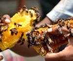 A honey vendor selling honey