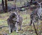 AUSTRALIA CANBERRA SNOW