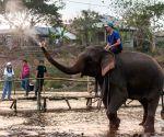 LAOS XAYABOURY ELEPHANT FESTIVAL