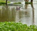 Flood in Kaziranga National Park