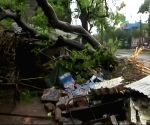 Cyclone Gaja kills 13, leaves trail of destruction in TN