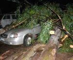 Rains uproot tress, leave 3 dead
