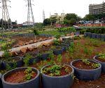 Medical plantation Garden launched - Uddhav Thackeray