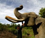 INDONESIA ACEH ELEPHANT CONSERVATION