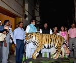 Amitabh Bachchan becomes the face of Save the Tiger Campaign