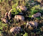 China's migrating elephan