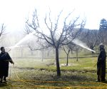 Will Centre's scheme for apple farmers in Kashmir work?(Special Report)