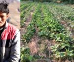 Free Photo: Agriculture sans chemicals is giving Himachal farmers better and sustainable incomes