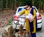 Animal lover comes to rescue of monkeys during lockdown, feeds them