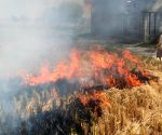 Stubble burning to abate as wheat sowing up in Punjab