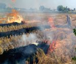 Punjab sees rise in stubble burning cases