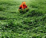 Storm damages crops in Punjab