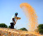 Kisan Sansad demands repeal of Essential Commodities Amendment Act